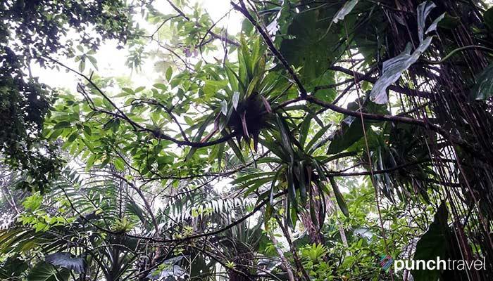 saba-plants