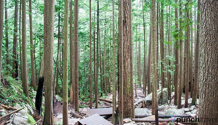 stawamus-chief-trail