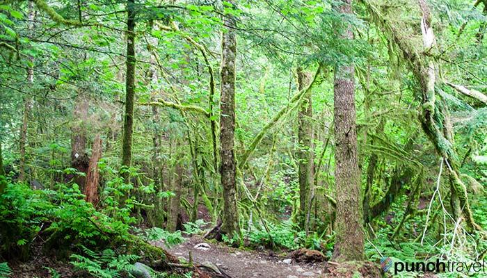 stawamus-chief-greenery