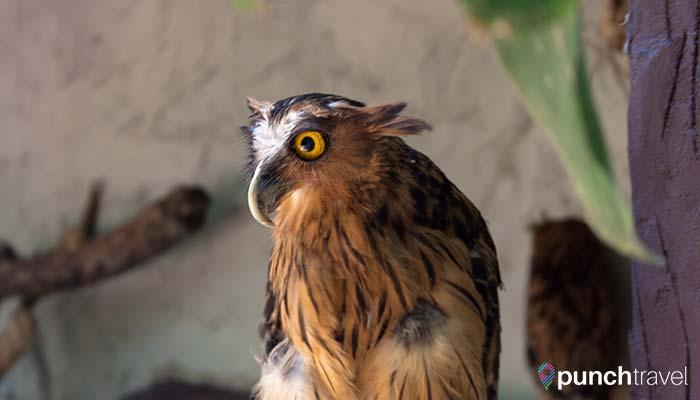 malaysia-kl-bird-park-owl