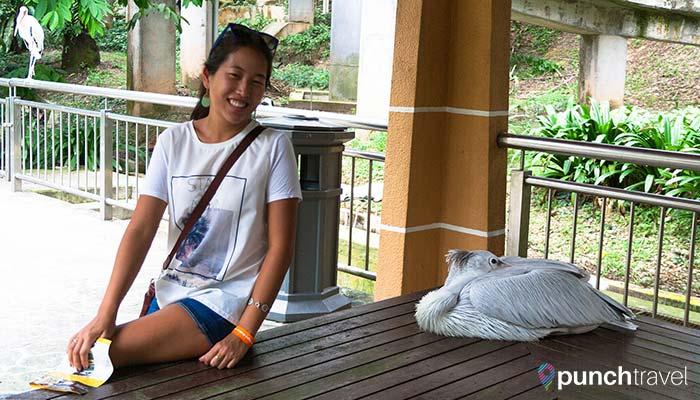 malaysia-kl-bird-park-stork