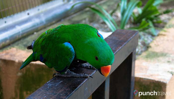 malaysia-kl-bird-park-parrot