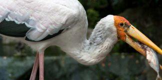 malaysia-kl-bird-park-header