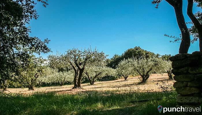 france-pont-du-gard-trees
