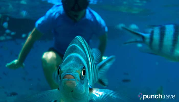 redang-island-fish-closeup
