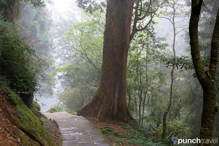 alishan_forest_taiwan-12