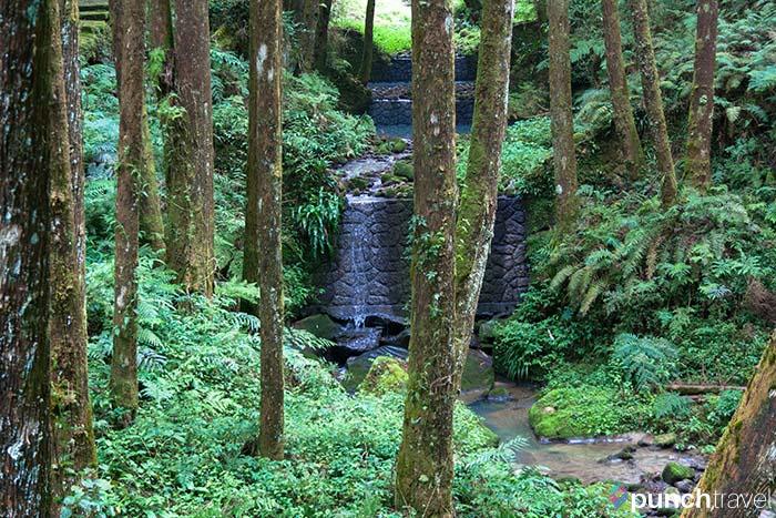 alishan_forest_taiwan-13