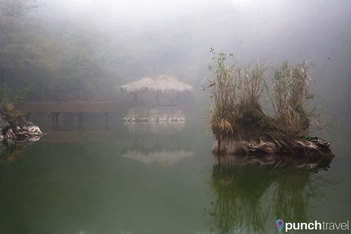 alishan_forest_taiwan-2