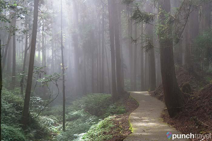 alishan_forest_taiwan-3