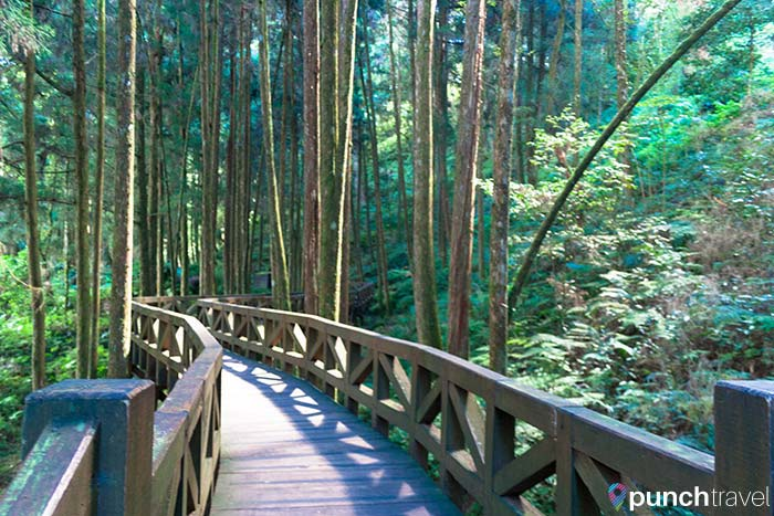 Hiking in Alishan Forest, Taiwan - Punch Travel