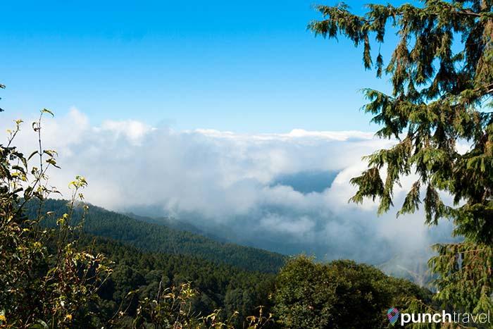 alishan_forest_taiwan-5