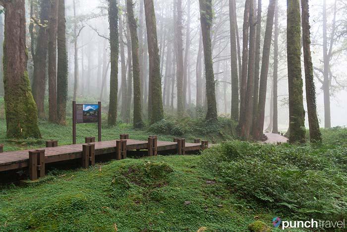 alishan_forest_taiwan-7